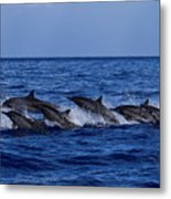 The Flight Of The Spinner Dolphin Metal Print