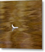 The Floating Feather Metal Print