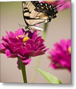 The Flower And Butterfly Metal Print