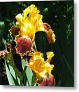 The Flowering Torch Metal Print