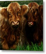 The Fluffy Cows Metal Print