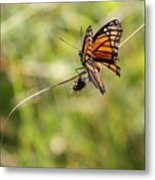 The Flutterby Metal Print