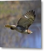 The Flying Hawk Metal Print