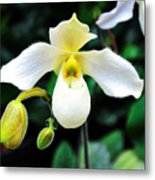 The Flying Orchid Metal Print