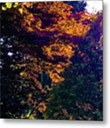 The Forest At Dusk Metal Print