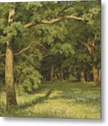 The Forest Clearing Metal Print
