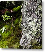 The Forest Floor Bluestone State Park West Virginia Metal Print