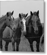 The Four Horses Metal Print
