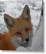 The Fox 4 Metal Print