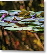 The Frog And The Lilipads Metal Print