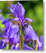 The Gentleness Of Spring 5 Metal Print