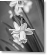The Gentleness Of Spring Bw Metal Print