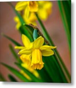 The Gentleness Of Spring Metal Print