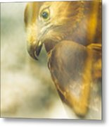 The Glass Case Eagle Metal Print