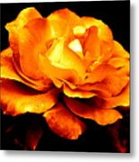 The Glow Of Amber.... Metal Print