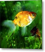 The Goldfish Metal Print