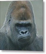 The Gorilla 4 Metal Print