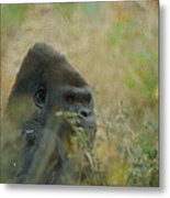 The Gorilla 5 Metal Print