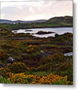 The Gorse It Was Abloomin Metal Print