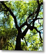 The Grace Of A Lonely Tree Metal Print