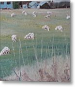 The Grazing Sheep Metal Print