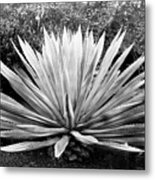 The Great Agave Metal Print