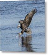 The Great American Bald Eagle 2016-8 Metal Print