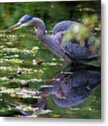 The Great Blue Heron Hunting For Food Metal Print