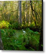 The Great Corkscrew Swamp Metal Print