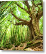 The Great Tree Metal Print