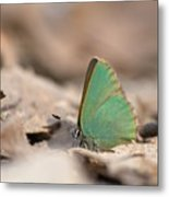 The Green Hairstreak Metal Print