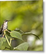 The Green Hummingbird Metal Print