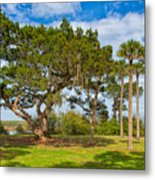The Grounds Of The Kingsley Plantation Metal Print