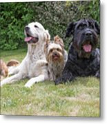 The Group Of Dogs Metal Print