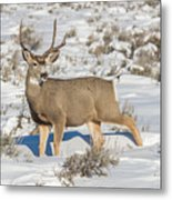 The Gtnp Mule Deer Buck Metal Print