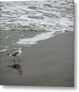 The Gulf In Shades Of Gray - Strutting Metal Print
