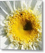 The Heart Of A Daisy Metal Print