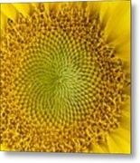 The Heart Of The Sunflower Metal Print