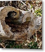 The Heart Of The Tree Metal Print