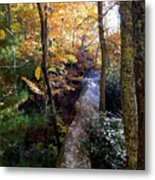 The Hidden Log Rock Metal Print