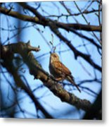 The Hiding Singer. Dunnock Metal Print
