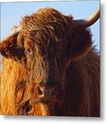 The Highland Cow Metal Print