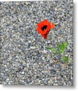 The Hopeful Poppy Metal Print
