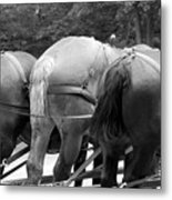 The Horses Of Mackinac Island Michigan 03 Bw Metal Print