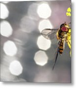The Hoverfly Metal Print