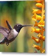 The Hummingbird And The Bee Metal Print