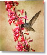 The Hummingbird And The Spring Flowers  Metal Print
