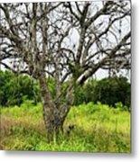 The Hunting Tree Metal Print