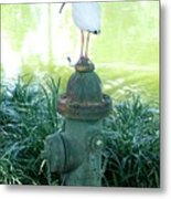 The Hydrant Bird Metal Print