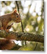 The Hypnotized Squirrel Metal Print